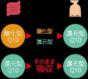 Q10 還元 型 コエンザイム